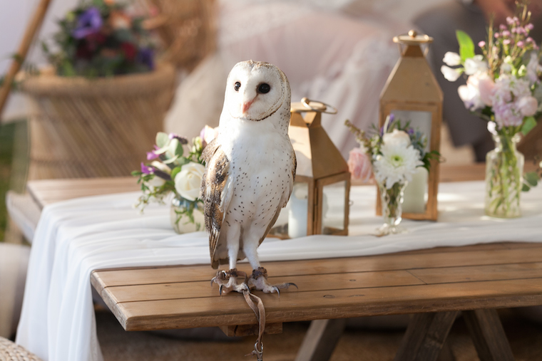 Owl ring bearer Maleny _ The Bride's Tree