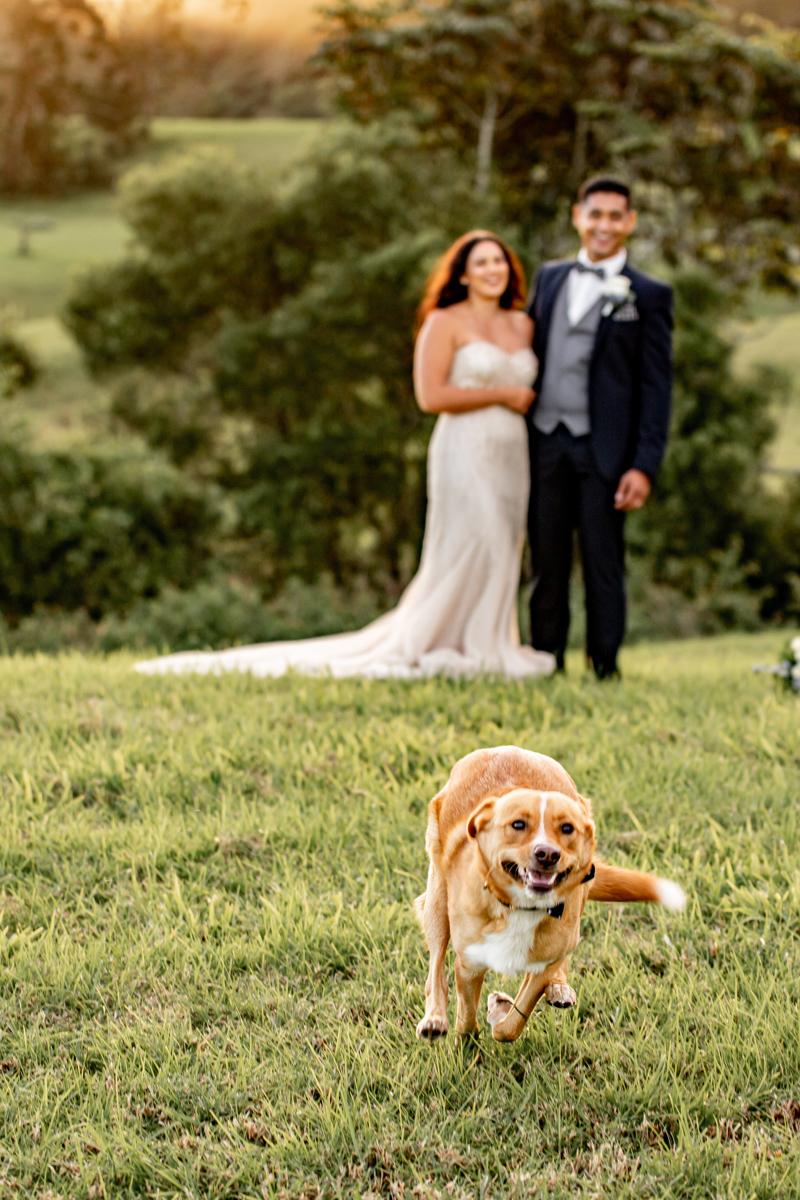 Icefeatherwind-Photography-Sunshine-Coast-wedding-photographer-236-colour