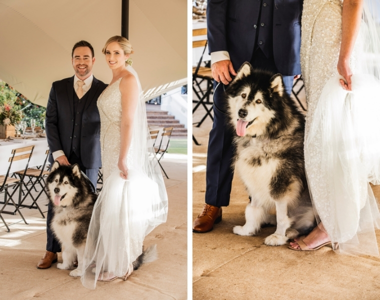 Sunshine Coast pet sitting for weddings